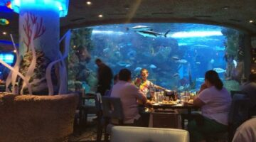 It's A Fun Dining Experience For Kids And Adults At The Aquarium Restaurant: Nashville, TN