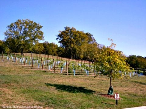 Arrington Vineyards in Franklin, TN has fields of grapevines scattered throughout the hills. photo by Brenda