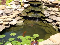 backyard-pond-franklin-tn.jpg