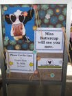 buttercup-how-to-milk-a-cow.jpg
