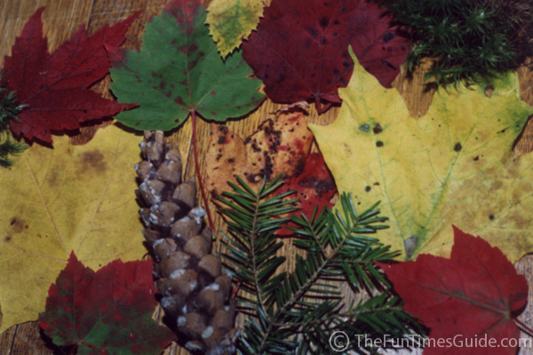 Closeup of colorful autumn leaves. photo by Lynnette at TheFunTimesGuide.com
