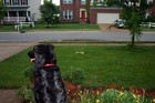 Destin enjoyed watching the water sprinkler from the porch, while keeping an eye on all our neighbors.