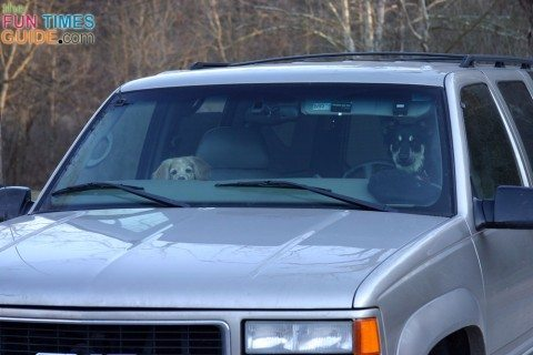 dog-driving-car