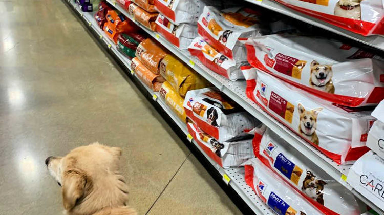 Walking down the dog food aisle in the supermarket.