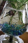A blue fish swimming in a fishbowl with a plant.