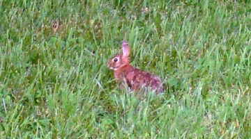 Franklin Tennessee Wildlife… As Close As Your Own Backyard