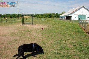 harlinsdale-farm-dog-park