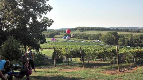 Hot air balloons at Arrington Vineyards.