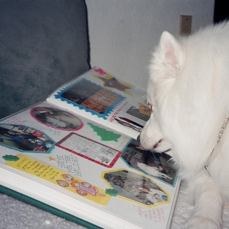Jersey checking out a scrapbook page that includes photos of him.