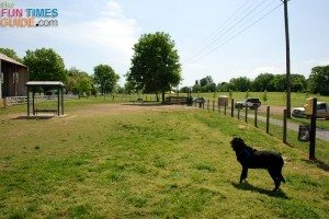 k9-corral-dog-park-franklin-tn