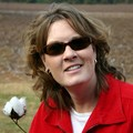 Lynnette pickin' cotton along the roadside between Nashville and Mississippi on the Natchez Trace Parkway.