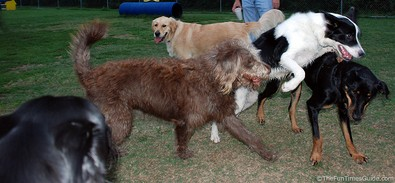 many-dogs-at-the-dog-park.jpg