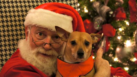Pet photos with Santa Claus at The Farm at Natchez Trace.