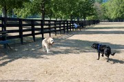 the-play-yard-inside-warner-dog-park.jpg