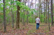 walking-in-the-woods-natchez-trace.jpg