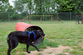 dog-tunnel-at-franklin-dog-park.jpg