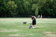 dogs-at-warner-dog-park-nashville-tn.jpg