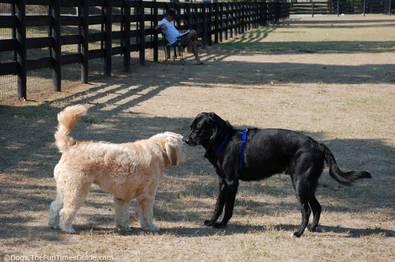 new-friends-at-the-dog-park.jpg