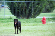 tenor-at-the-dog-park.jpg