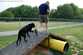 tenors-first-time-over-the-doggie-ramp.jpg